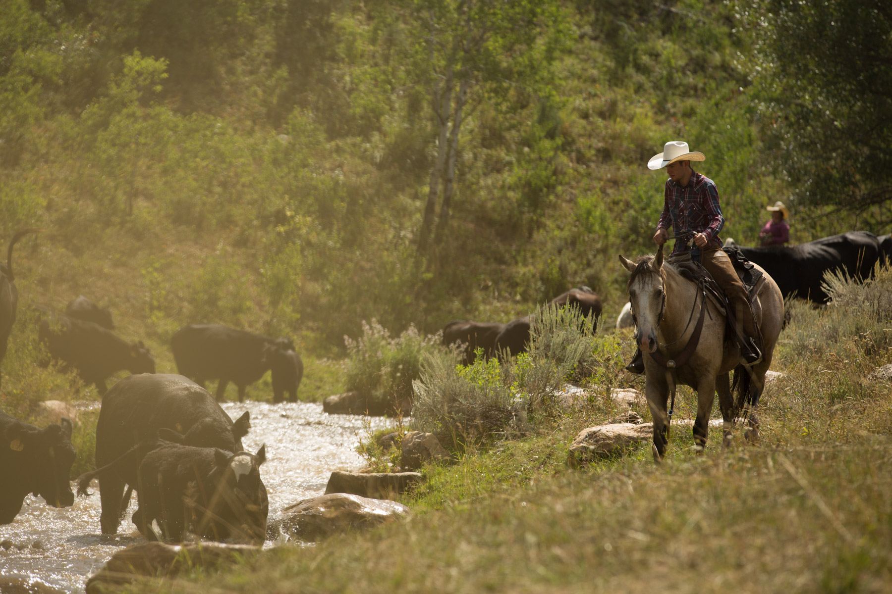Cattle_Drive___MG_5603